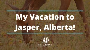 My Vacation to Jasper, Alberta!